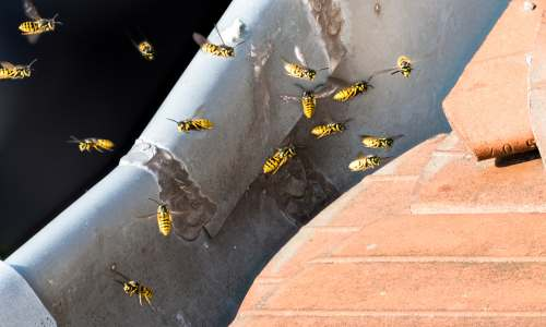 Wasp / Bees Nest Removal Derbyshire